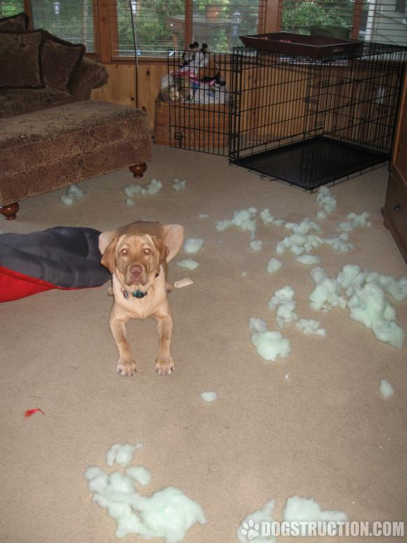 """Mom, I have now idea how all this stuffing just fell out of my bed!"""